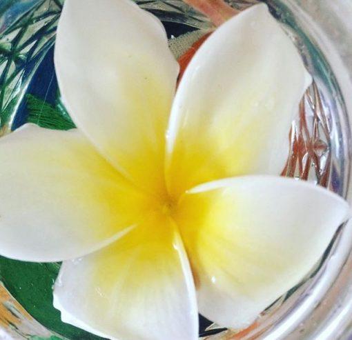 Plumeria Flower Essence