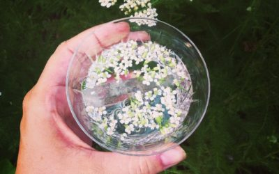 How to be a Shield of Light: The Spiritual Gifts of Yarrow